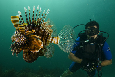 Oman_Diving_Lionfish1.jpg