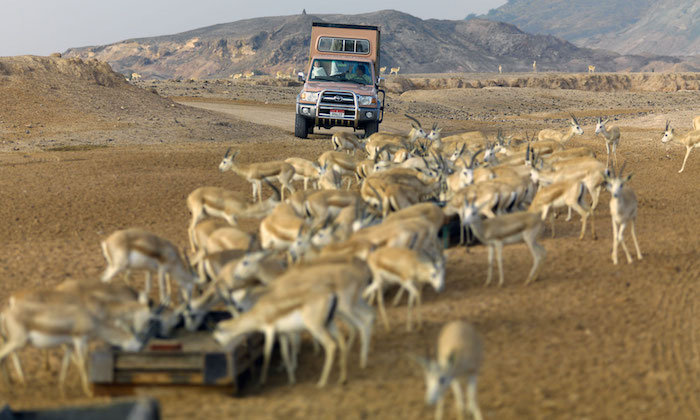 uae elite travel tourism sir bani yas